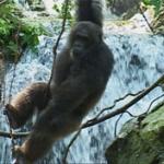 Frodo the chimpanzee and waterfall